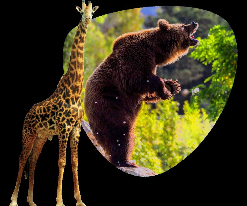 home_Safari1