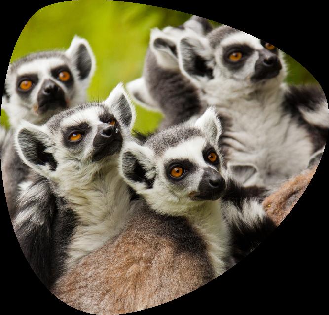 Lemure_page_ov_01
